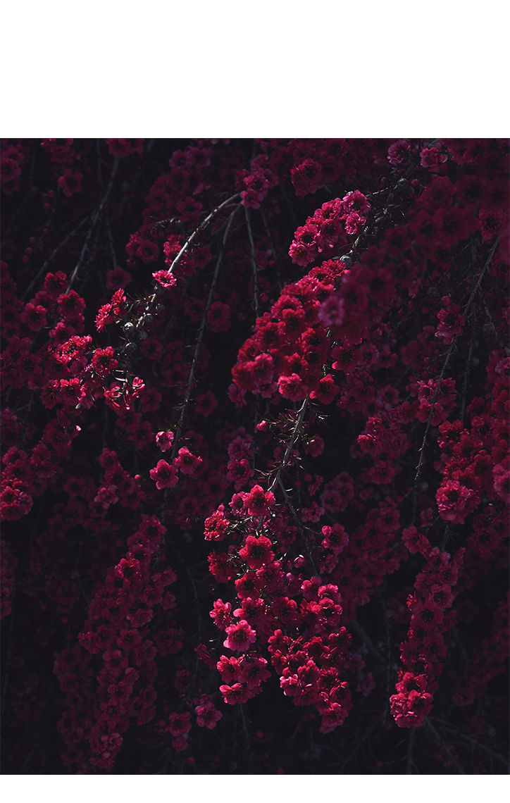 RED_FLOWERS_2